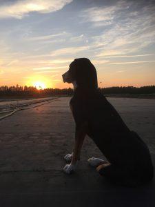 Claussen_Impressionen_Hund